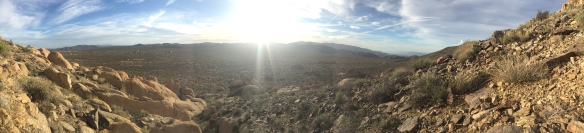 Joshua Tree Afternoon